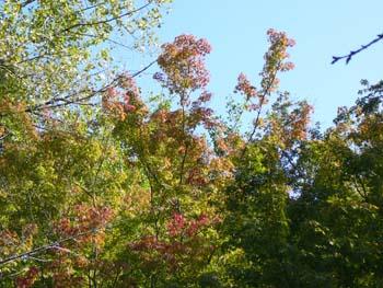 2014茂原公園の秋