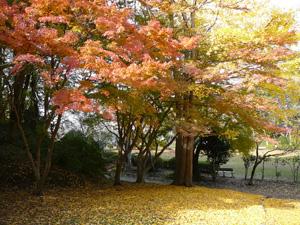 2012-12茂原公園