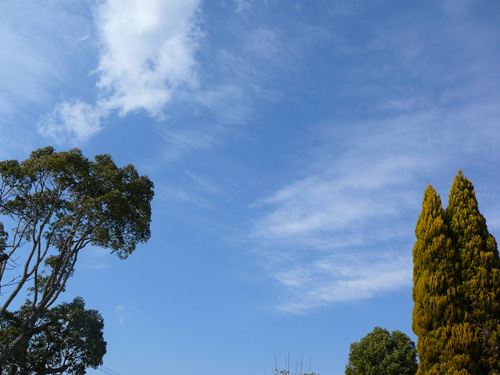 茂原市と長生郡長生村の境にある双葉電子さんのドッグランからの空