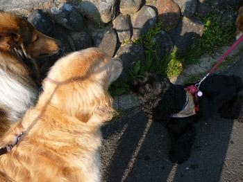 茂原市萩原交通公園のお散歩
