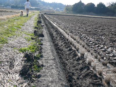 2014年 茂原市の田んぼのクロヌリ