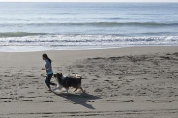 九十九里海岸をラフコリーと走る