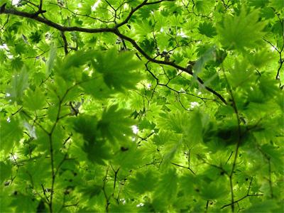 新緑の5月