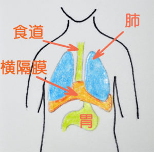 原因不明の吐き気と横隔膜